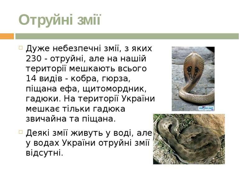Отруйні змії Дуже небезпечні змії, з яких 230 - отруйні, але на нашій територ...
