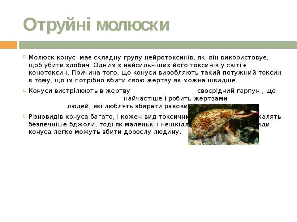 Отруйні молюски Молюск конус має складну групу нейротоксинів, які він викорис...