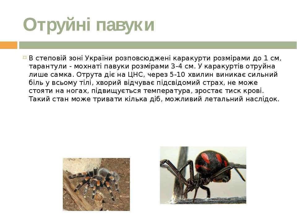 Отруйні павуки В степовій зоні України розповсюджені каракурти розмірами до 1...