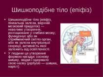 Шишкоподібне тіло (епіфіз) Шишкоподібне тіло (епіфіз, пінеальна залоза, верхн...