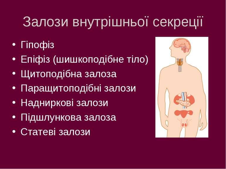 Залози внутрішньої секреції Гіпофіз Епіфіз (шишкоподібне тіло) Щитоподібна за...