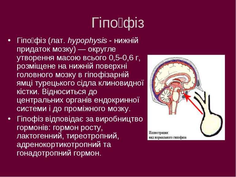 Гіпо фіз Гіпо фіз (лат. hypophysis - нижній придаток мозку) — округле утворен...