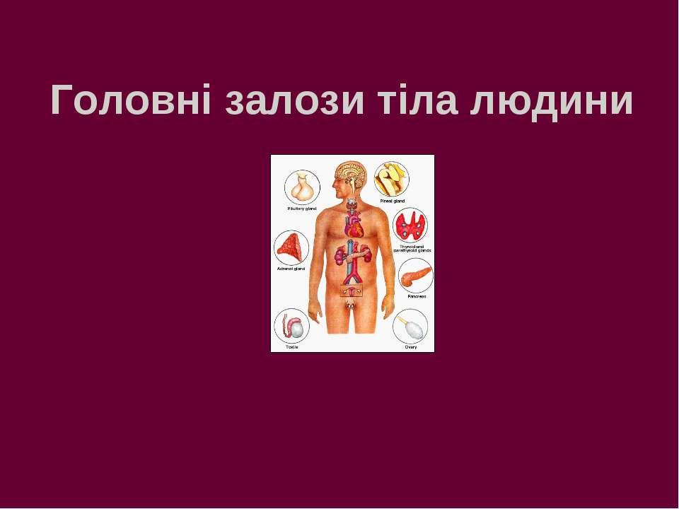 Головні залози тіла людини