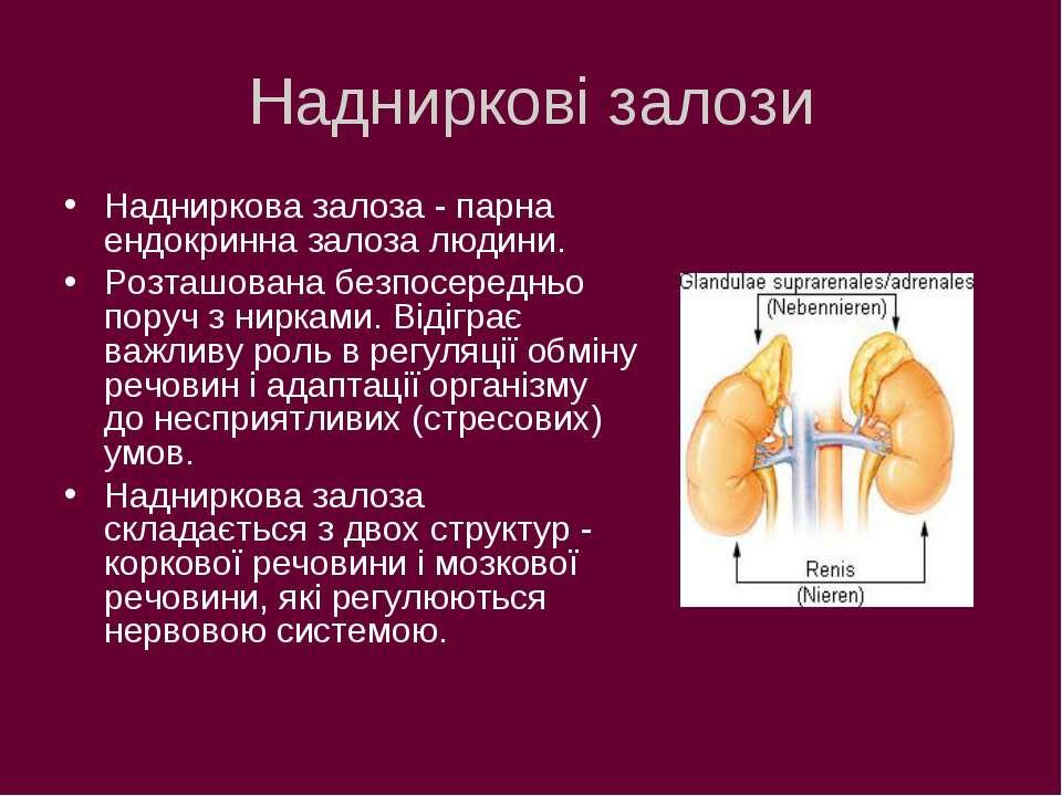 Надниркові залози Надниркова залоза - парна ендокринна залоза людини. Розташо...