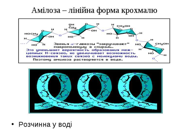Амілоза – лінійна форма крохмалю Розчинна у воді
