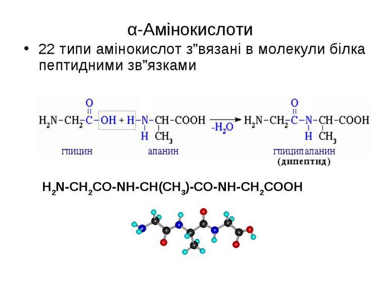 """α-Амінокислоти 22 типи амінокислот з""""вязані в молекули білка пептидними зв""""яз..."""