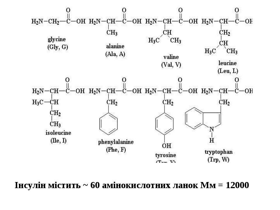 Інсулін містить ~ 60 амінокислотних ланок Мм = 12000