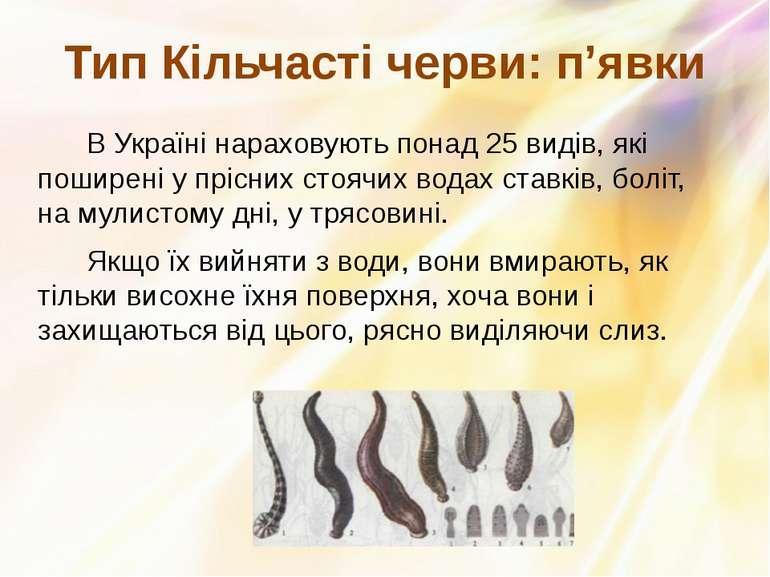 В Українінараховують понад 25 видів, які поширені у прісних стоячих водах ст...