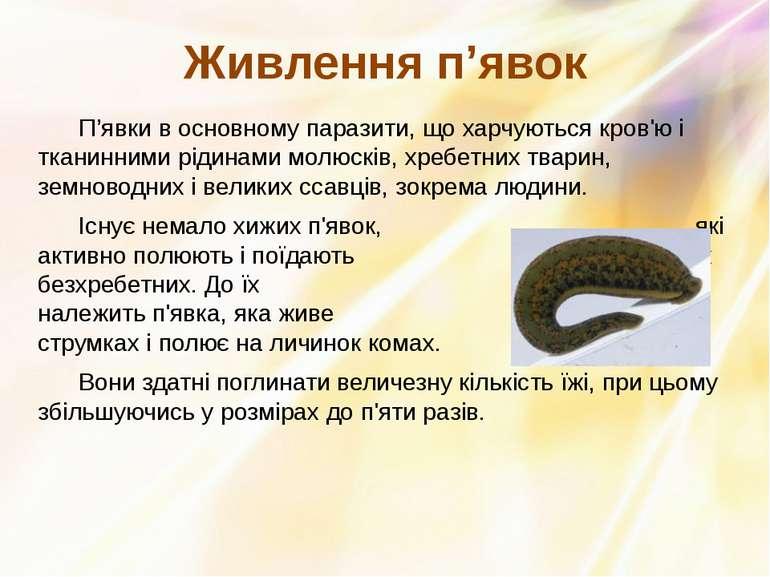 П'явки в основному паразити, що харчуються кров'ю і тканинними рідинами молюс...