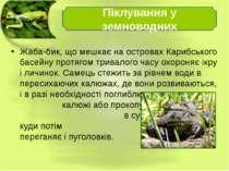 Жаба-бик, що мешкає на островах Карибського басейну протягом тривалого часу о...