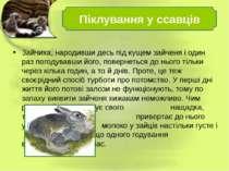 Зайчиха, народивши десь під кущем зайченя і один раз погодувавши його, поверн...