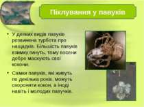 У деяких видів павуків розвинена турбота про нащадків. Більшість павуків взим...