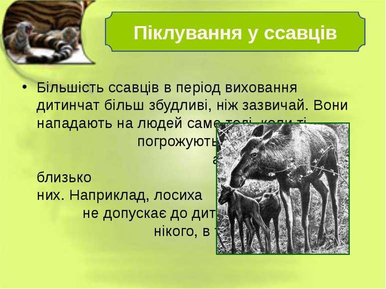 Більшість ссавців в період виховання дитинчат більш збудливі, ніж зазвичай. В...