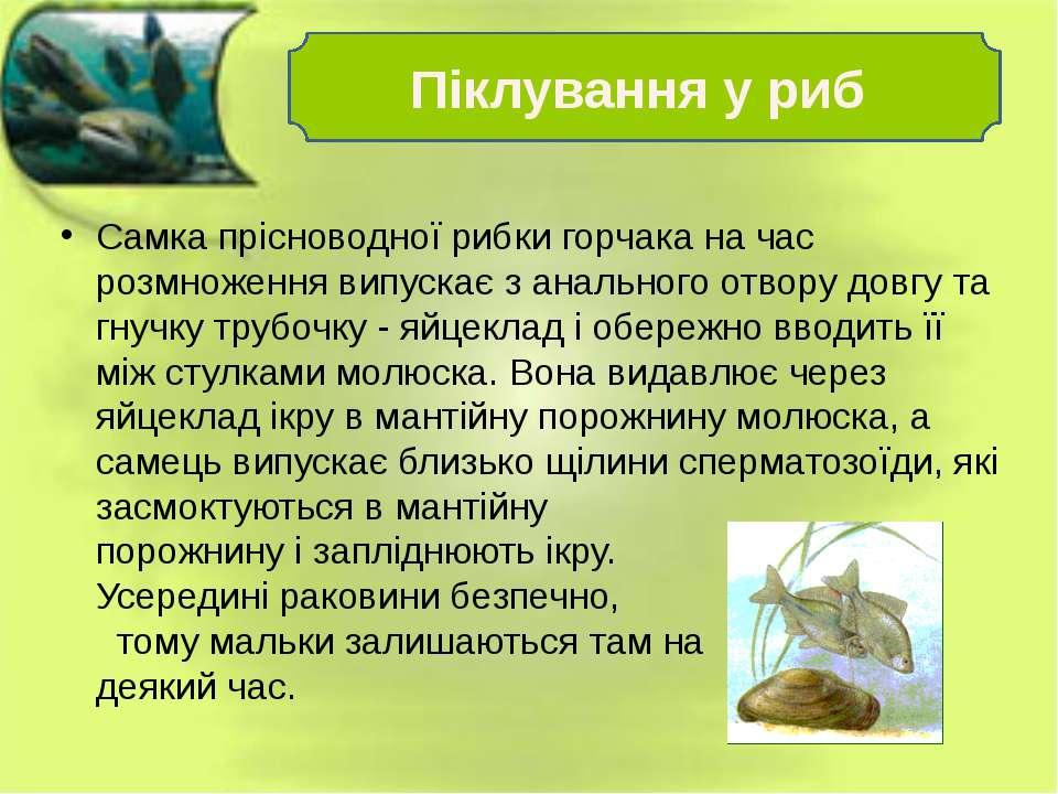 Самка прісноводної рибки горчака на час розмноження випускає з анального отво...