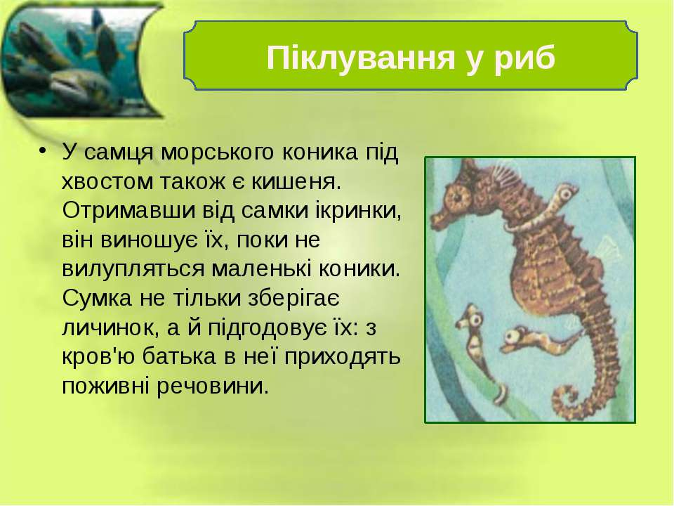 У самця морського коника під хвостом також є кишеня. Отримавши від самки ікри...