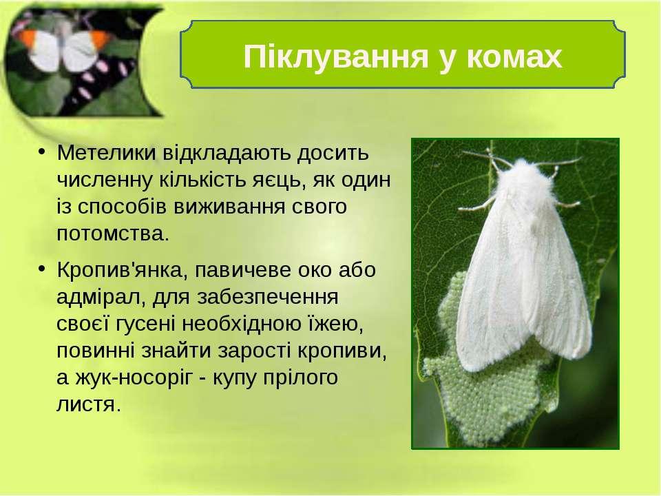 Метелики відкладають досить численну кількість яєць, як один із способів вижи...