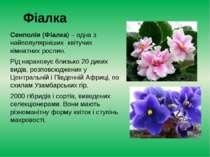 Фіалка Сенполія(Фіалка) – одна з найпопулярніших квітучих кімнатних рослин....
