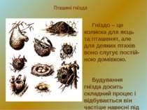 Пташині гнізда Гніздо – це колиска для яєць та пташенят, але для деяких птахі...