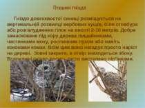 Пташині гнізда Гніздо довгохвостої синиці розміщується на вертикальній розвил...