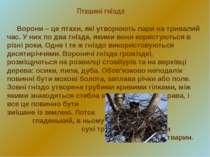 Пташині гнізда Ворони – це птахи, які утворюють пари на тривалий час. У них п...