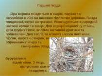 Пташині гнізда Сіра ворона гніздиться в садах, парках та неглибоко в лісі на ...