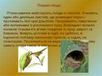 Пташині гнізда Птахи-швачки майструють гнізда із листків. Згинають один або д...