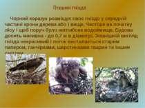 Пташині гнізда Чорний коршун розміщує своє гніздо у середній частині крони де...