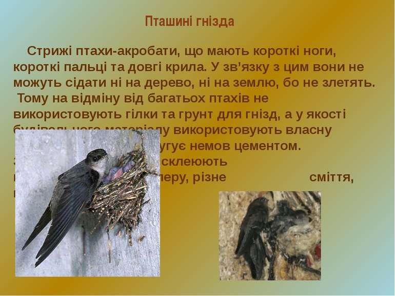 Стрижі птахи-акробати, що мають короткі ноги, короткі пальці та довгі крила. ...