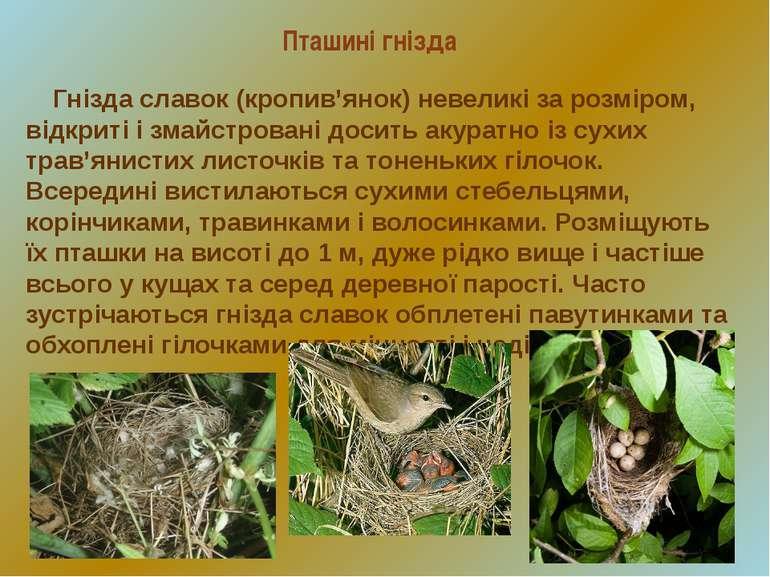 Пташині гнізда Гнізда славок (кропив'янок) невеликі за розміром, відкриті і з...