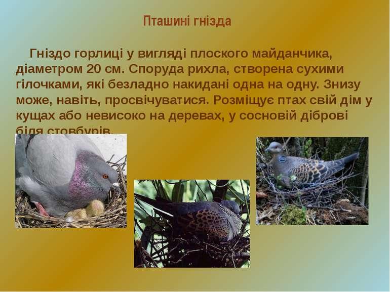 Пташині гнізда Гніздо горлиці у вигляді плоского майданчика, діаметром 20 см....