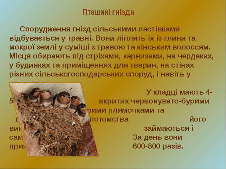 Пташині гнізда Спорудження гнізд сільськими ластівками відбувається у травні....