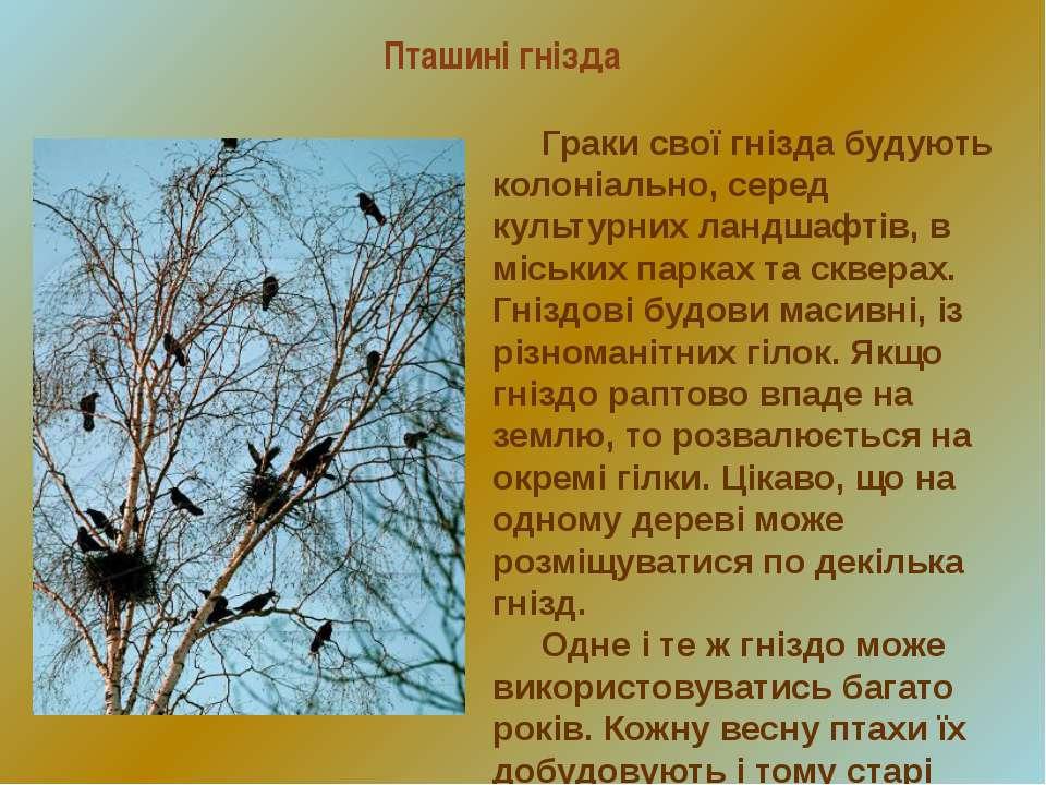 Пташині гнізда Граки свої гнізда будують колоніально, серед культурних ландша...