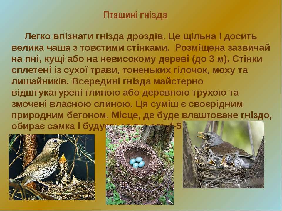 Пташині гнізда Легко впізнати гнізда дроздів. Це щільна і досить велика чаша ...