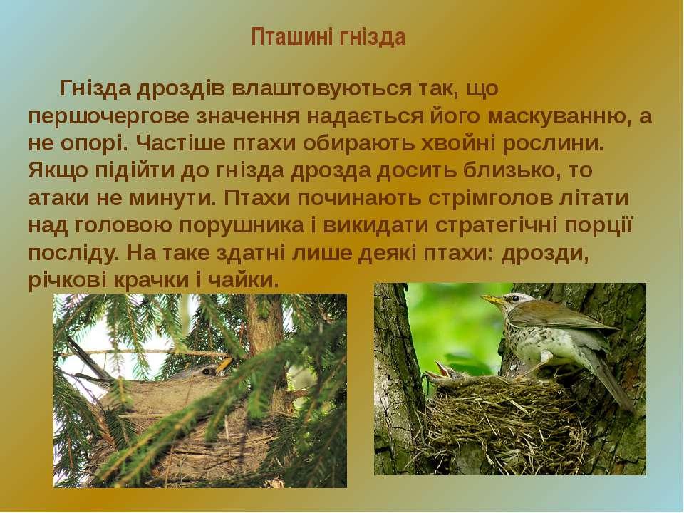 Пташині гнізда Гнізда дроздів влаштовуються так, що першочергове значення над...