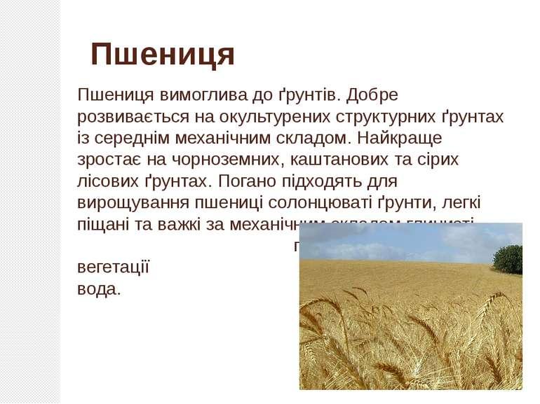 Пшениця вимоглива до ґрунтів. Добре розвивається на окультурених структурних ...