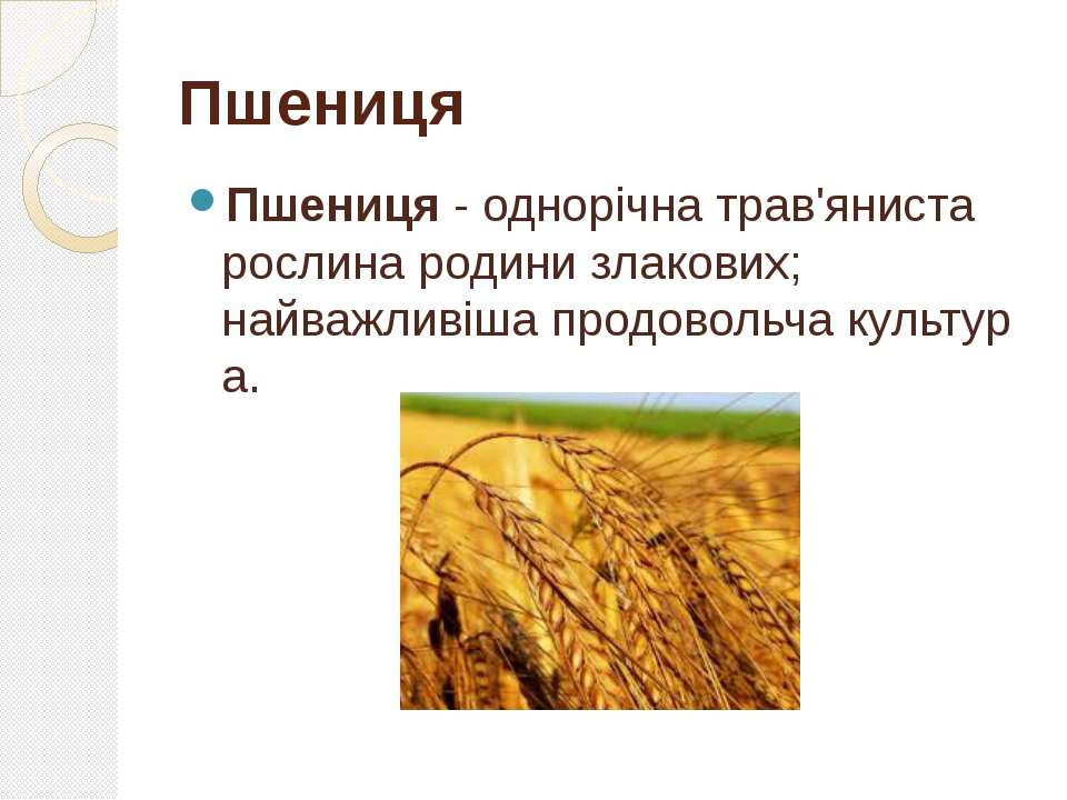 Пшениця- однорічнатрав'яниста рослинародинизлакових; найважливішапродово...
