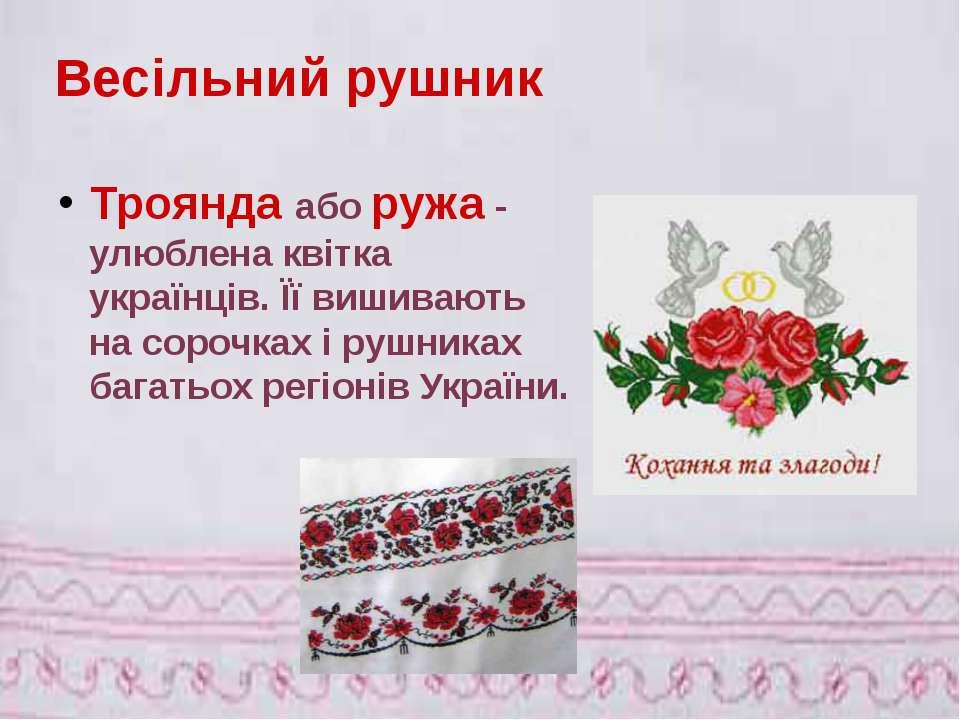 Троянда аборужа - улюблена квітка українців. Її вишивають на сорочках і рушн...