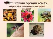 Які ротові органи мають зображені комахи? Ротові органи комах