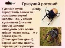 У деяких жуків виростають великі за розмірами верхні щелепи. Так, у самця жук...