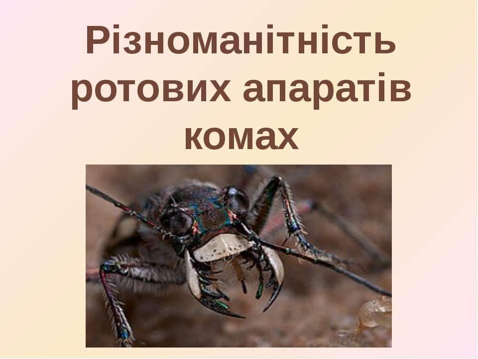 Різноманітність ротових апаратів комах