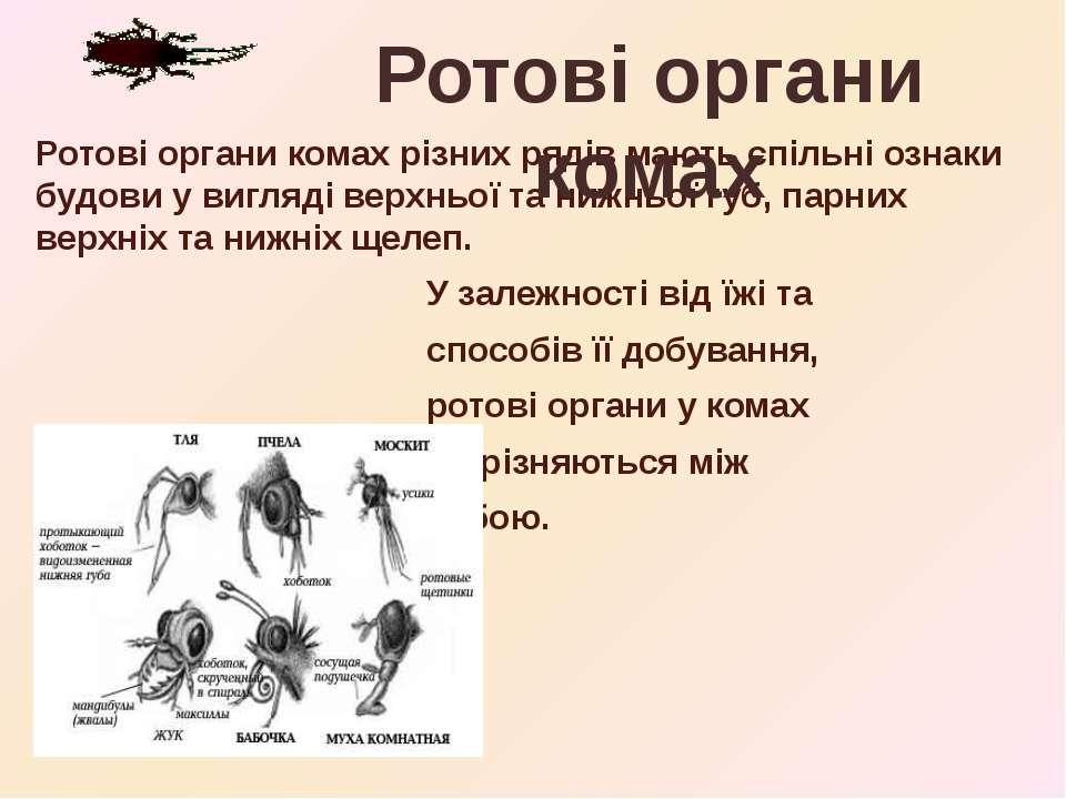 Ротові органи комах різних рядів мають спільні ознаки будови у вигляді верхнь...