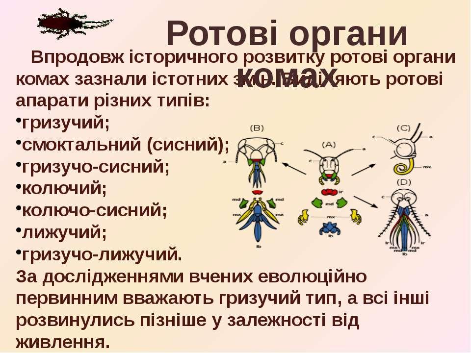 Впродовж історичного розвитку ротові органи комах зазнали істотних змін. Виді...