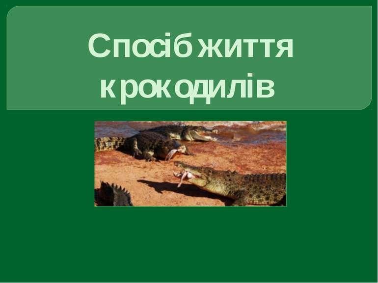 Спосіб життя крокодилів