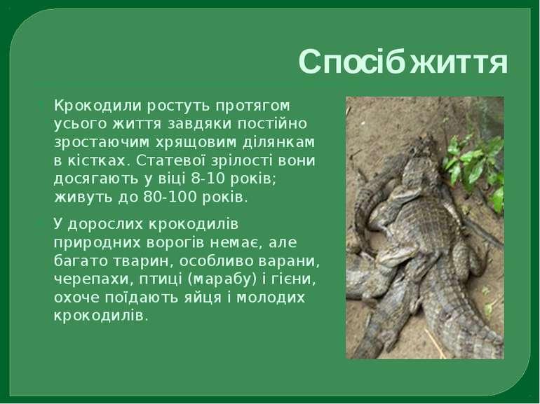 Спосіб життя Крокодили ростуть протягом усього життя завдяки постійно зростаю...