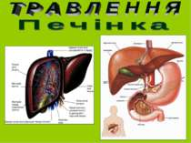 Печінка