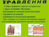 Стінка травного каналу складається з трьох основних оболонок: внутрішньої сли...