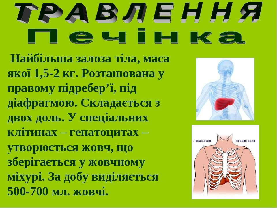 Найбільша залоза тіла, маса якої 1,5-2 кг. Розташована у правому підребер'ї, ...