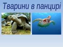 Тварини в панцирі