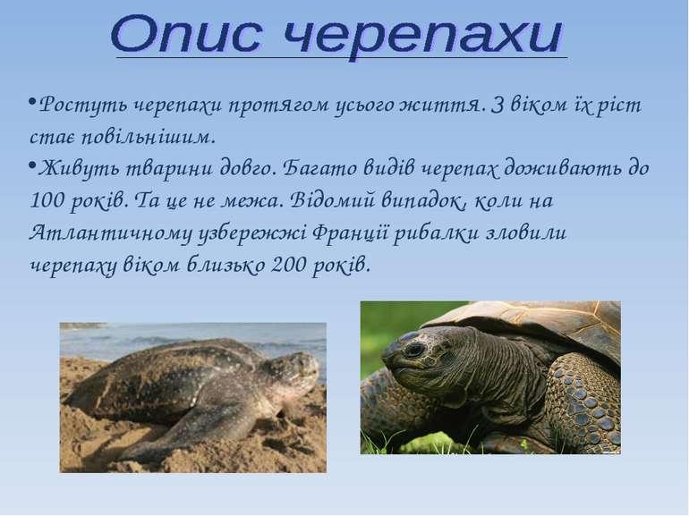 Ростуть черепахи протягом усього життя. З віком їх ріст стає повільнішим. Жив...