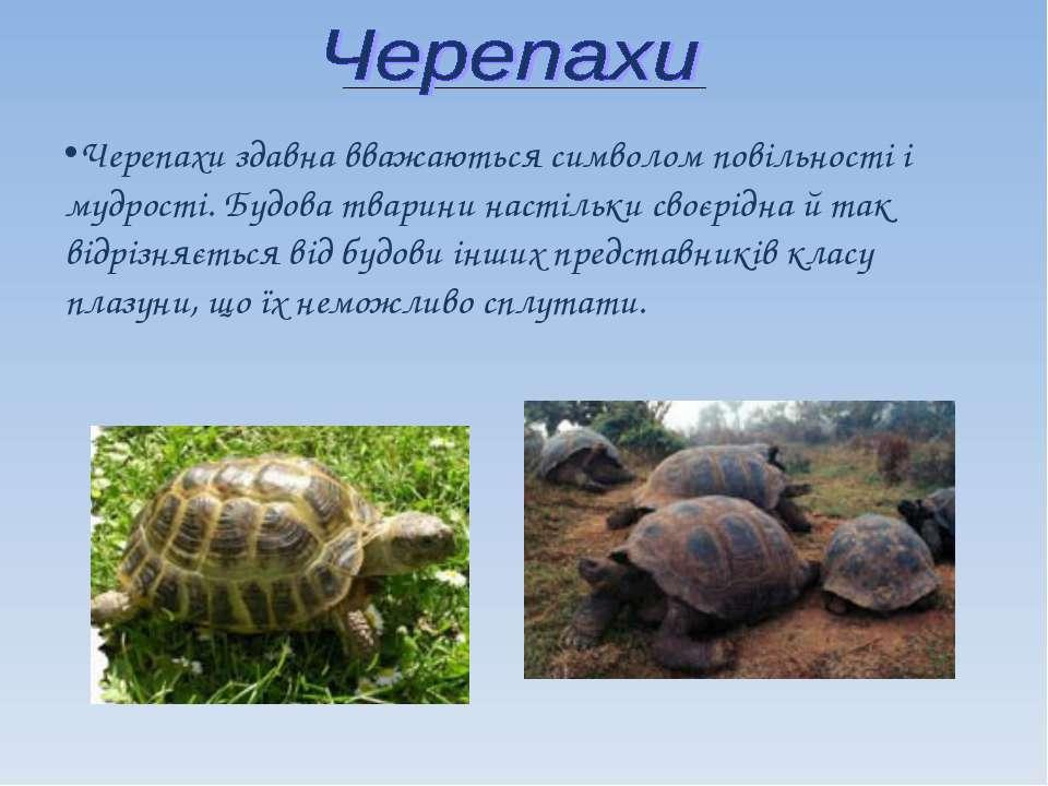 Черепахи здавна вважаються символом повільності і мудрості. Будова тварини на...